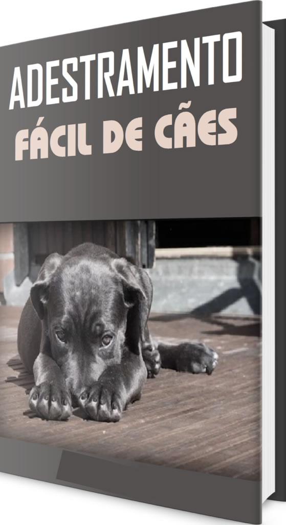 adestramento fácil de cão